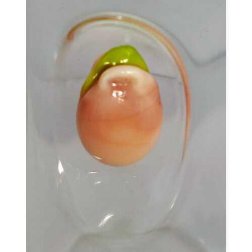 Likör Glas mit australischer Kotzfrucht - Medium - 75 ml